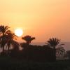 الشيخ سيد النقشبندي: مَوّلاي