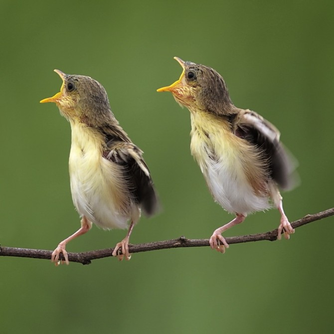 صباح مشرق سعيد تغرد فيه العصافير بأجمل الأماني