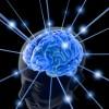 سبحان الله ….لا يكتمل نمو الدماغ إلا مع نهاية سن الأربعين !